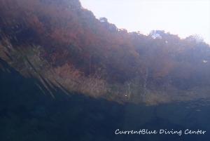 5水中から見上げる風景ダイバー目線 (3)