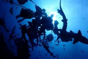 伊戸館山ダイビングサメの見れる海,日帰りでダイビング,成田ダイビング,鎌ヶ谷ダイビング,印西ダイビング, (7)
