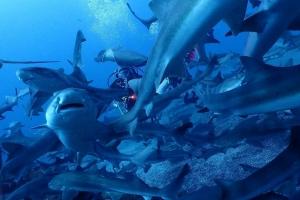 伊戸館山ダイビングサメの見れる海,日帰りでダイビング,成田ダイビング,鎌ヶ谷ダイビング,印西ダイビング, (8)