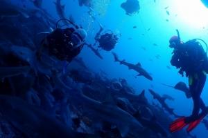 伊戸館山ダイビングサメの見れる海,日帰りでダイビング,成田ダイビング,鎌ヶ谷ダイビング,印西ダイビング, (4)