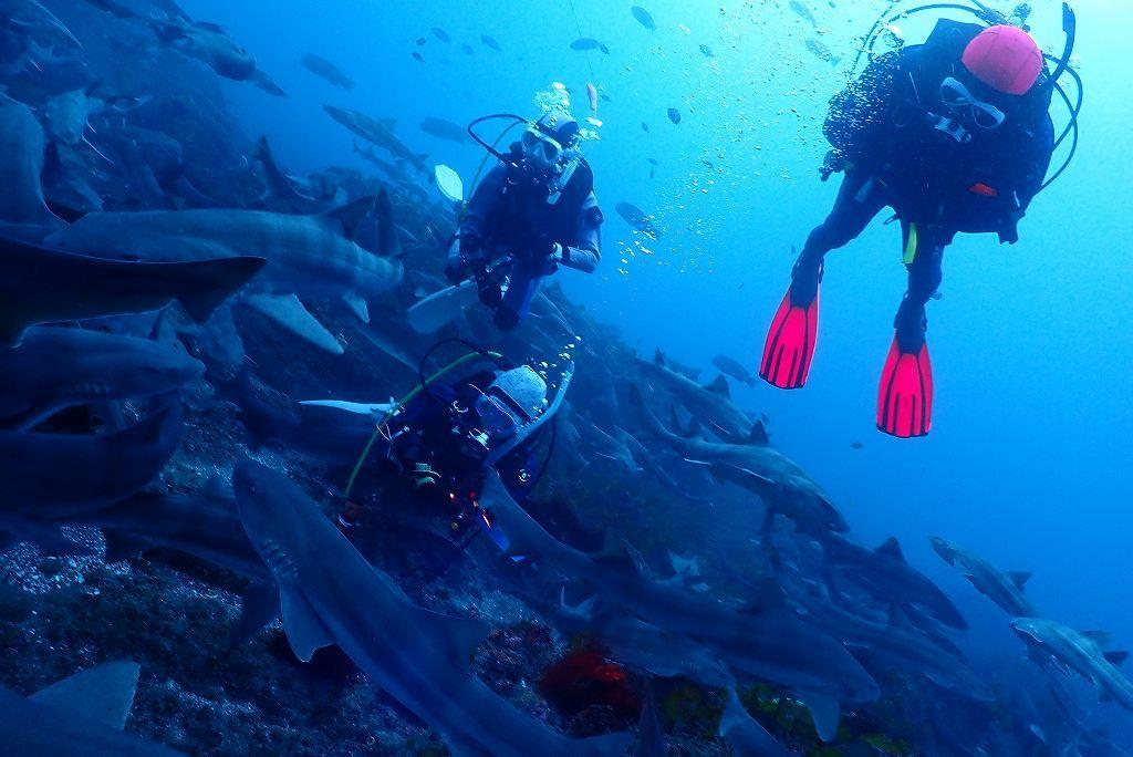 伊戸館山ダイビングサメの見れる海,日帰りでダイビング,成田ダイビング,鎌ヶ谷ダイビング,印西ダイビング, (5)