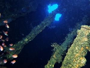 200202熱海ダイビング (10)