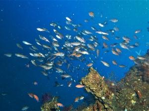 200202熱海ダイビング (12)