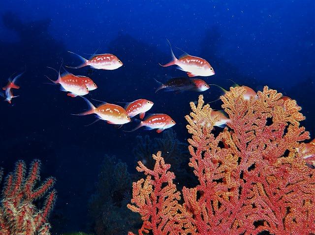 200202熱海ダイビング (27)