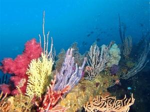 200202熱海ダイビング (36)