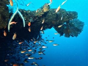 200202熱海ダイビング (45)