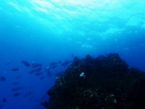 200202熱海ダイビング (111)