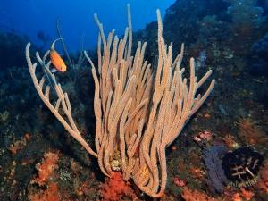 200202熱海ダイビング (75)