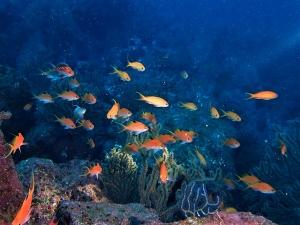 200202熱海ダイビング (23)