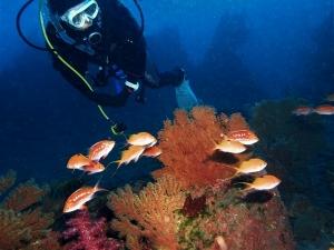 200202熱海ダイビング (32)