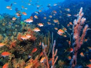 200202熱海ダイビング (66)