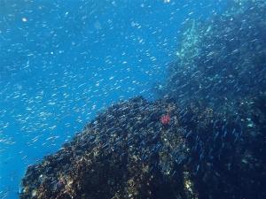 200202熱海ダイビング (88)
