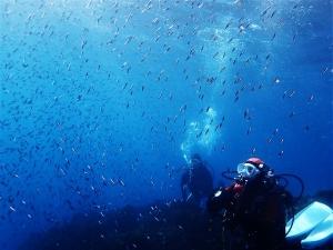 200202熱海ダイビング (93)