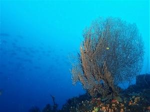 200202熱海ダイビング (107)