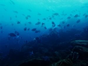 200202熱海ダイビング (110)