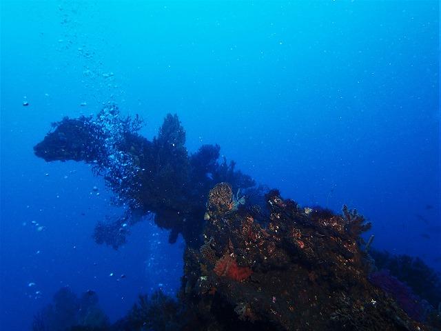 200202熱海ダイビング (4)