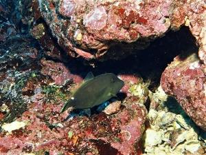 200202熱海ダイビング (97)