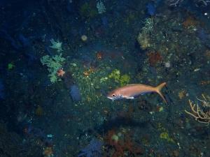 200202熱海ダイビング (105)