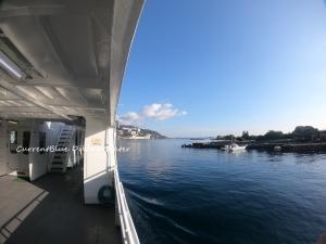 初島イルカ (6)