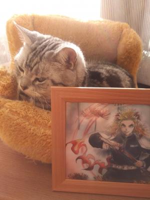 猫 煉獄さんイラスト