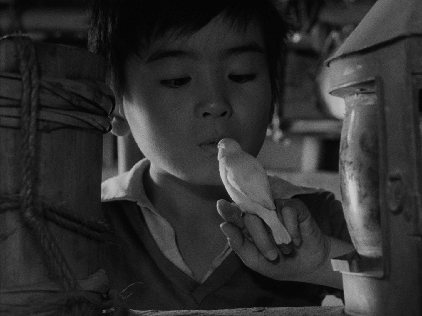 『ウルトラQ』第12話「鳥を見た」 小鳥&少年
