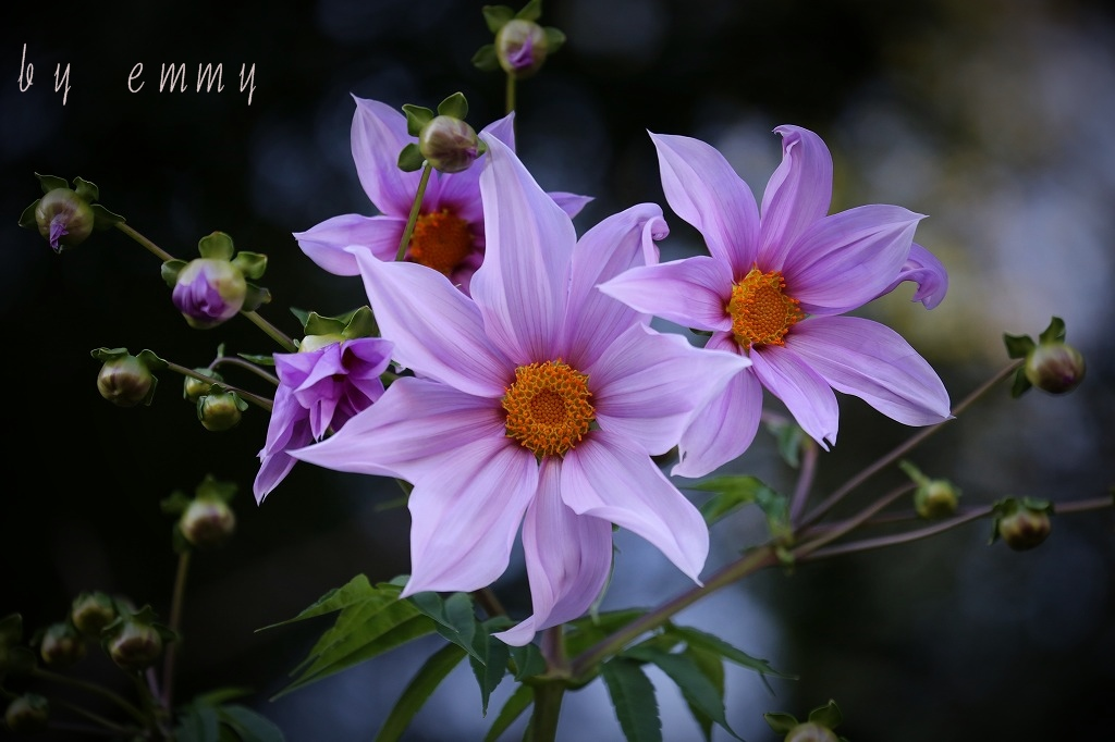 IMG_5175.jpg