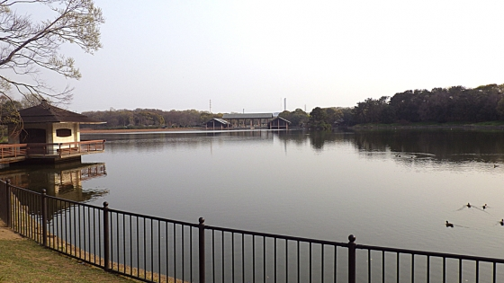 大泉池:2019年4月に大泉緑地にて撮影