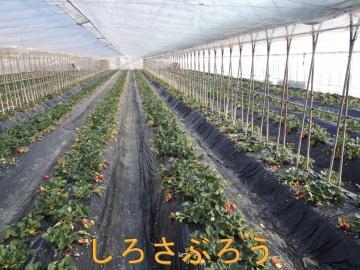 s-DSCN0197.jpg