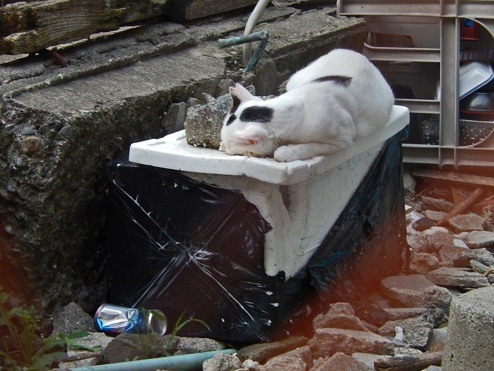 特等席で眠る猫
