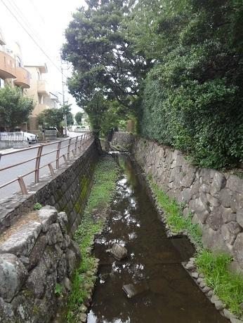 尾山台の丸子川