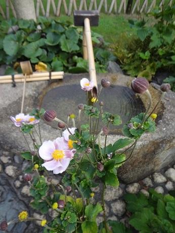 秋明菊と鹿威し