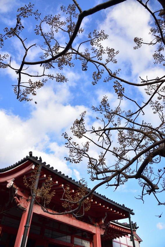 _20200105_152947_tsukanon (6-5)