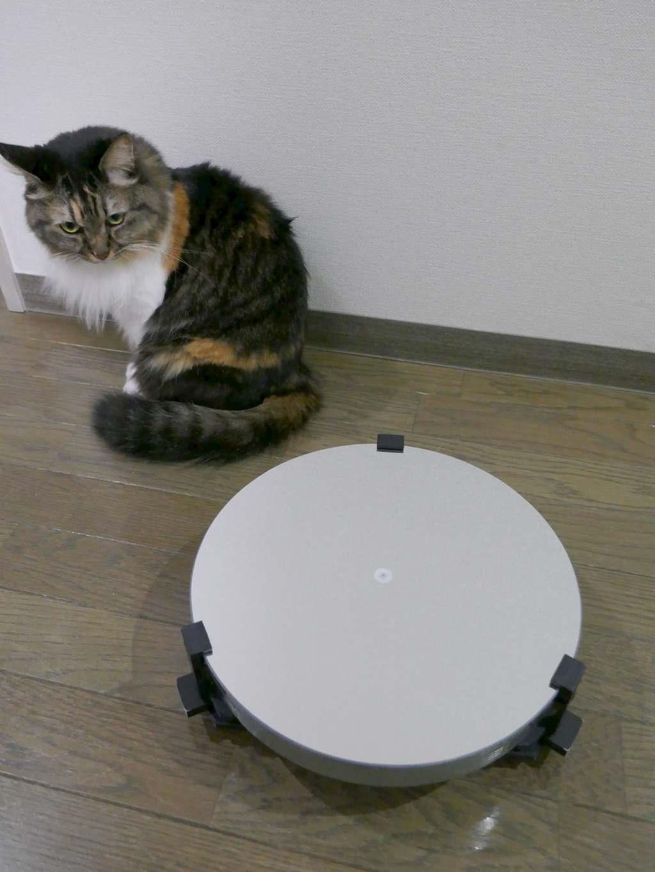 30cm主鏡を見る猫