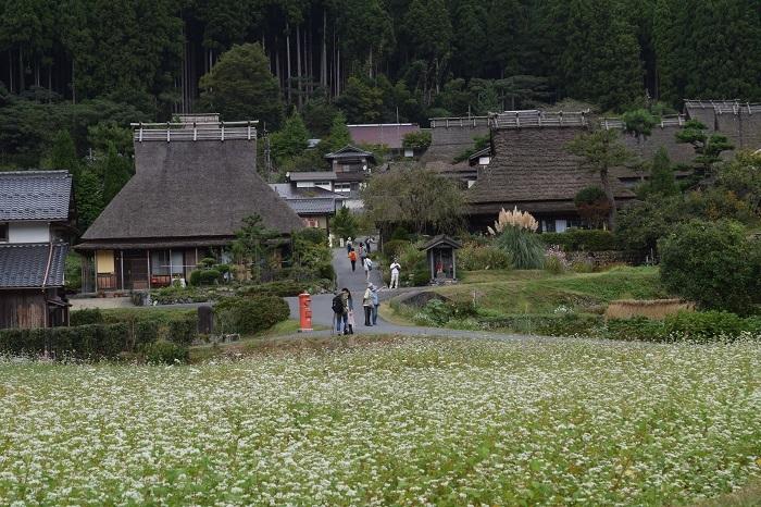 DSC_0099201910亀岡