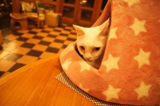 https://blog-001.west.edge.storage-yahoo.jp/res/blog-1f-50/hasebe_neko/folder/1429923/12/57041612/img_7_m?1566738748