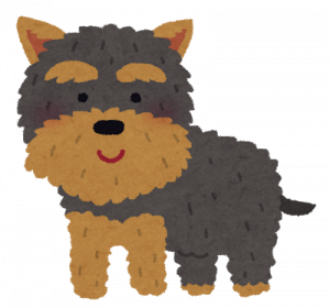 dog_yorkshire_terrier.png