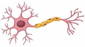 stem-cell-diagram-white-background_1308-15286.jpg