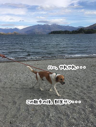 01022020_dog5.jpg