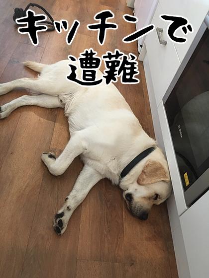 05032020_dogpic1.jpg