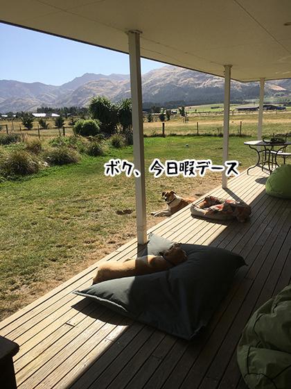 05032020_dogpic3.jpg