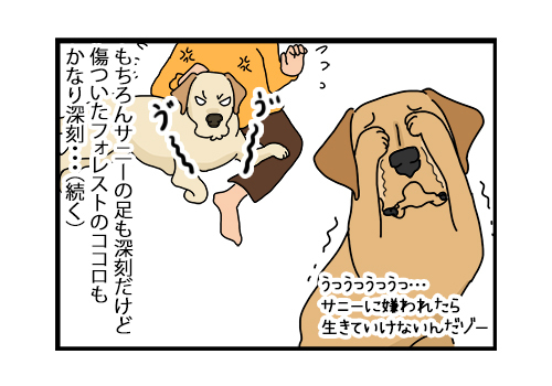06012020_dog4.jpg