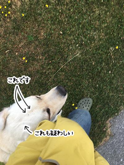 07022020_dogpic1.jpg