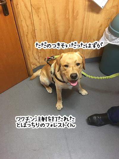 07022020_dogpic3.jpg