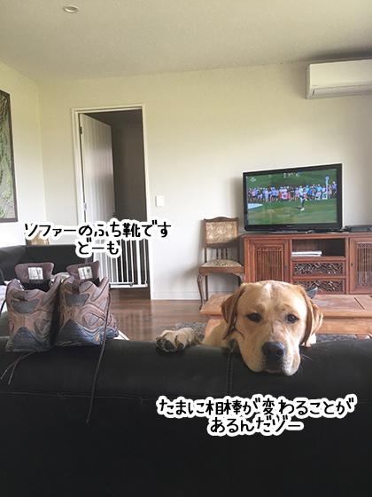 08022020_dog4.jpg