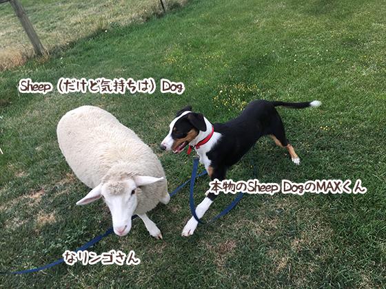 08032020_dogpic1.jpg