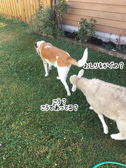 10022020_dogpic1.jpg