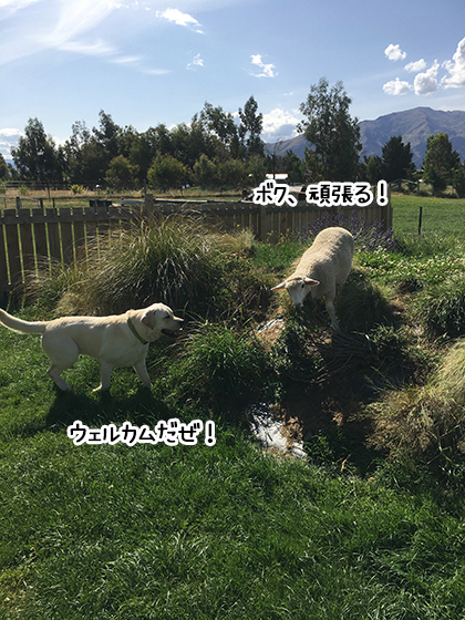 10022020_dogpic2.jpg