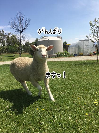10022020_dogpic3.jpg