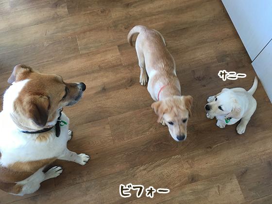 10032020_dog1.jpg