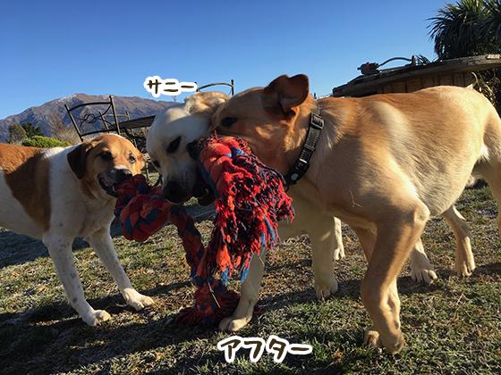 10032020_dog2.jpg